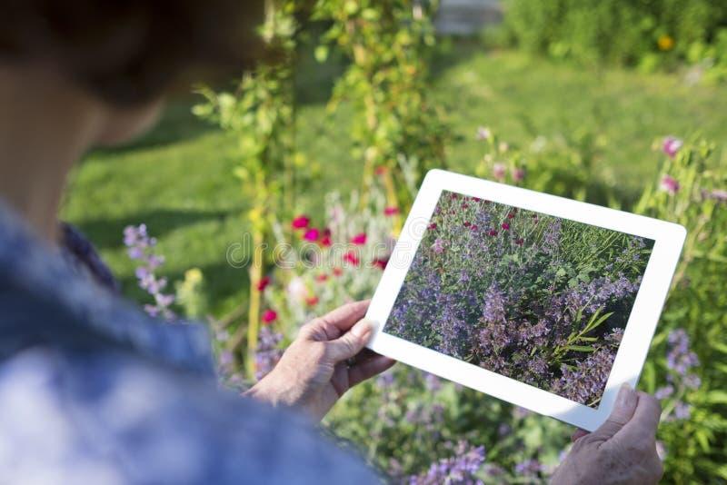 Изображение женщины старшее принимая с ее ПК таблетки в саде стоковое фото rf