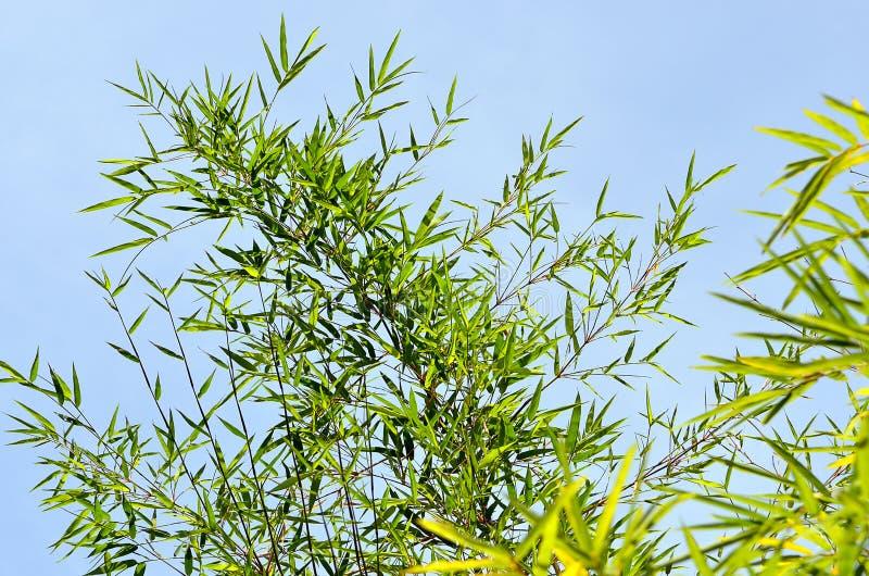 Изображение запаса бамбукового леса стоковое изображение