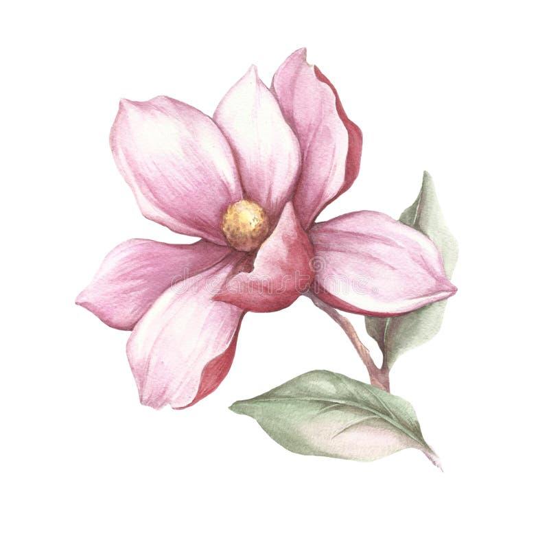 Изображение зацветая ветви магнолии изображение иллюстрации летания клюва декоративное своя бумажная акварель ласточки части иллюстрация вектора