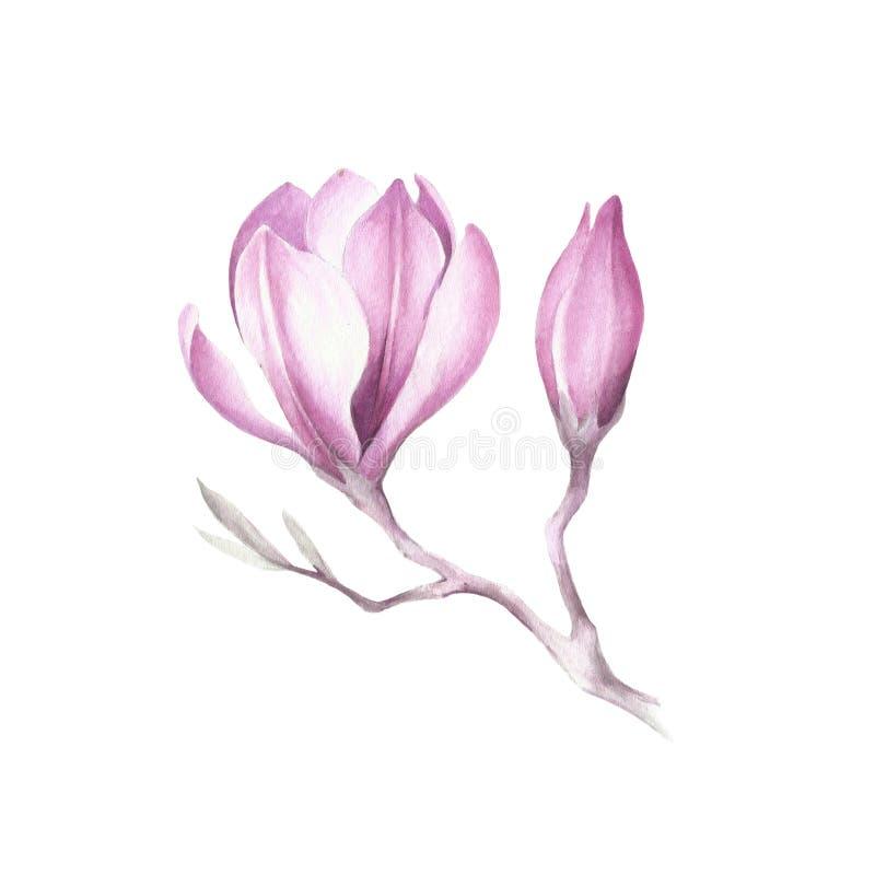 Изображение зацветая ветви магнолии изображение иллюстрации летания клюва декоративное своя бумажная акварель ласточки части бесплатная иллюстрация