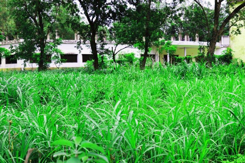 Изображение зеленых лист естественное Лес и зеленое дерево джунглей Красивый естественный пейзаж Глубокие тропические джунгли r Б стоковая фотография rf