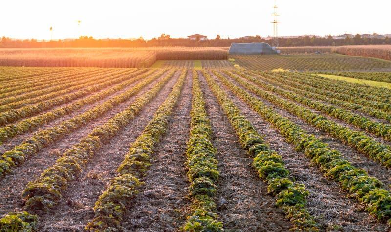 Изображение красивого захода солнца с полями и ландшафтом стоковое изображение rf