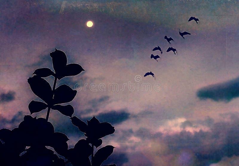 Изображение красивой ночи лунного света бесплатная иллюстрация