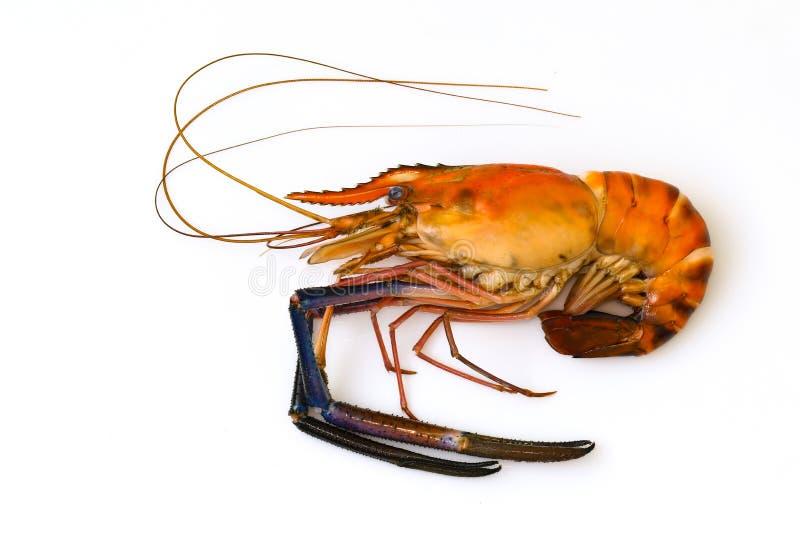 Изображение креветки или омара сваренных красным цветом Animsl стоковые фото