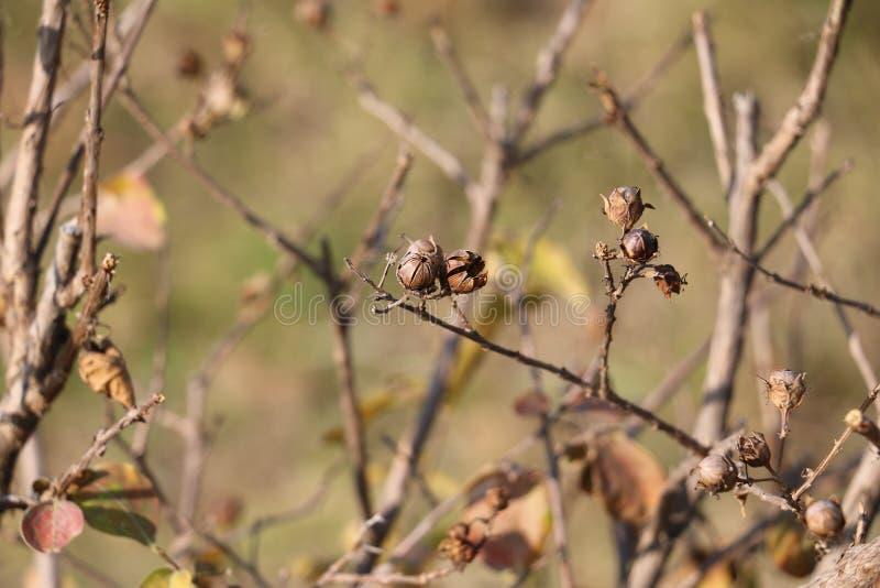 Изображение крупного плана дерева сезона осени стоковое фото rf
