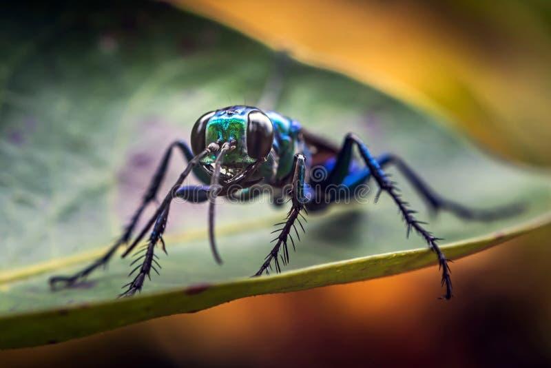 Изображение макроса насекомого сидя на лист стоковые фото