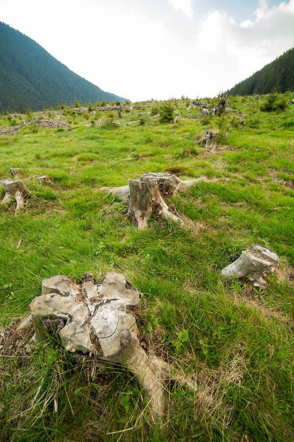 Изображение обезлесения стоковая фотография
