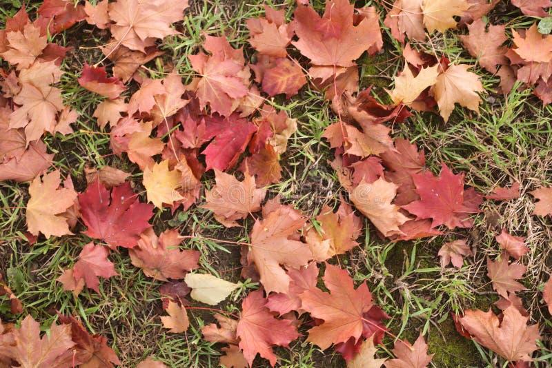 изображение осени близкое земное выходит вверх стоковая фотография