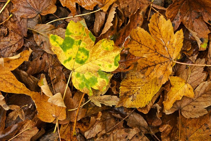 изображение осени близкое земное выходит вверх стоковая фотография rf