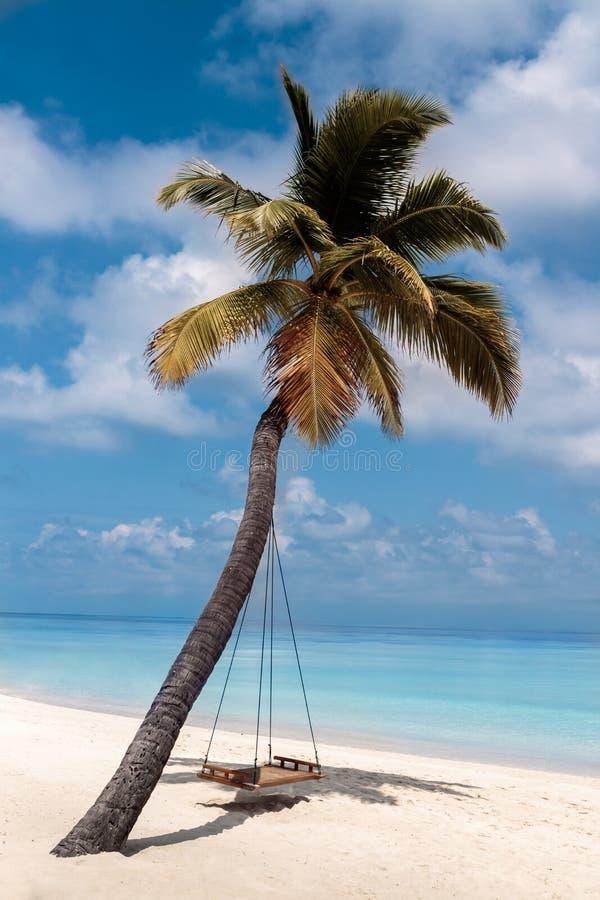 Изображение пальмы и качание на белом пляже стоковое изображение rf