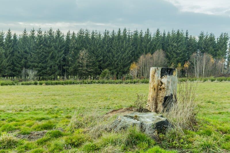 Изображение пня дерева в злаковике с сочным лесом на заднем плане стоковые изображения