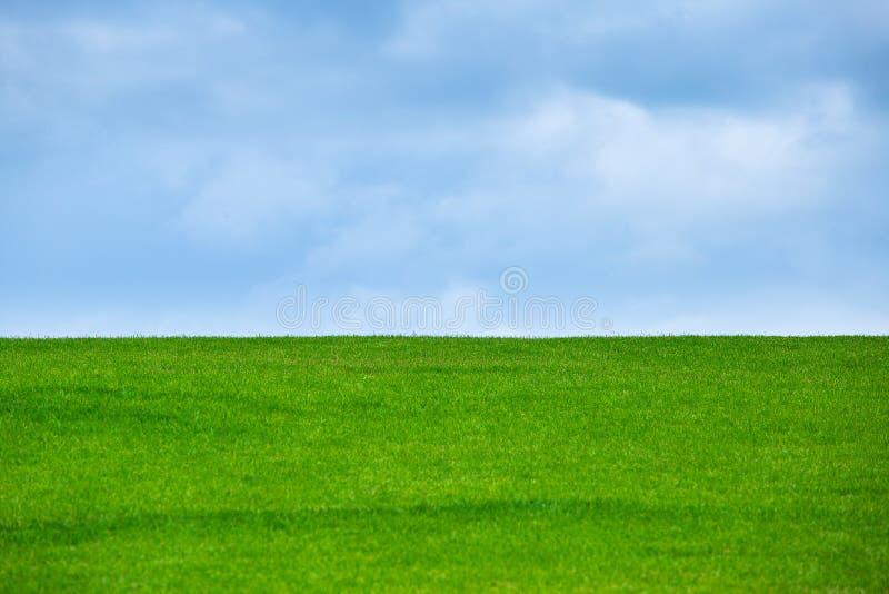 Изображение поля зеленой травы и яркого голубого неба стоковое фото rf