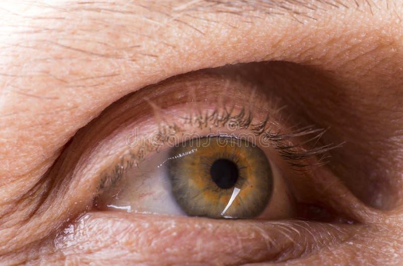 Изображение правого глаза зрелого человека стоковая фотография rf