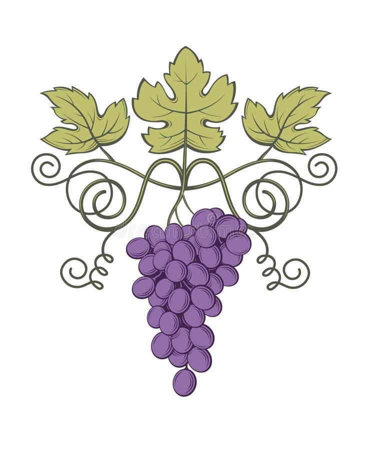 Как образуется гроздь винограда в картинках