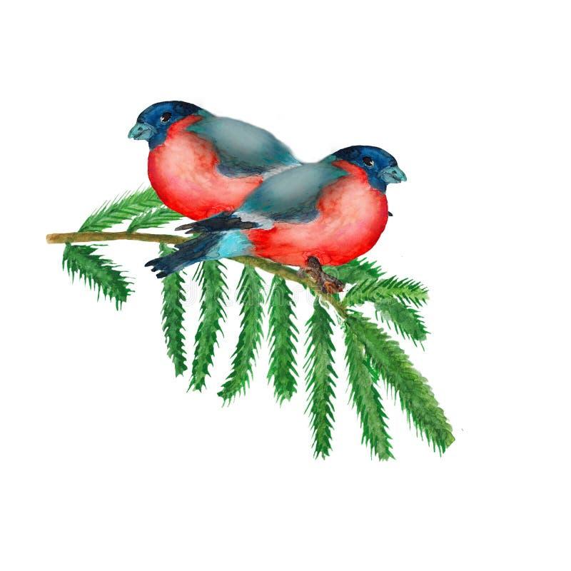Изображение рождества акварели с ветвями и bullfinch ели иллюстрация вектора