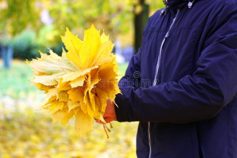 Изображение рук человека держа букет желтого клена le стоковые изображения rf
