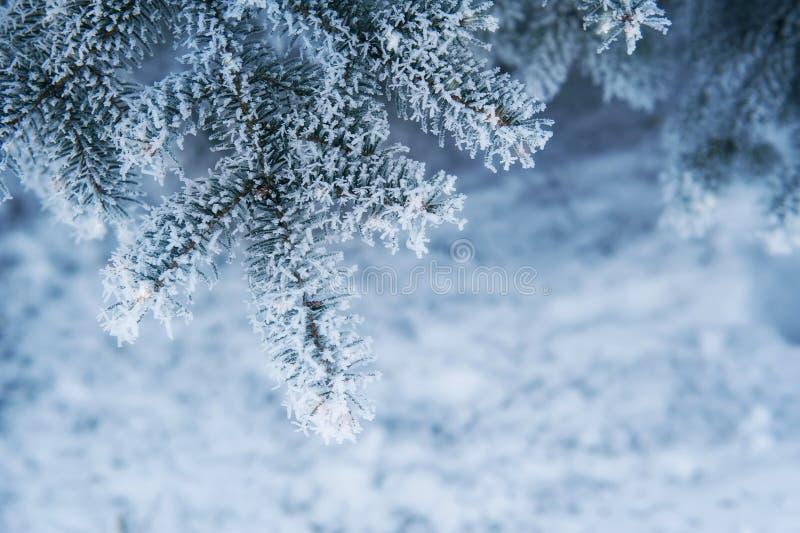 Изображение снежной предпосылки ели, абстрактного естественного фона стоковое изображение