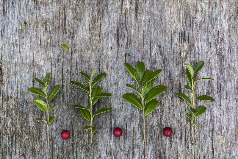 Изображение сделанное листьев и ягод стоковое фото rf