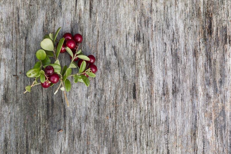 Изображение сделанное листьев и ягод стоковая фотография