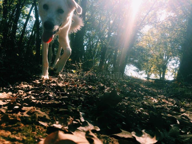 изображение с doggy стоковая фотография