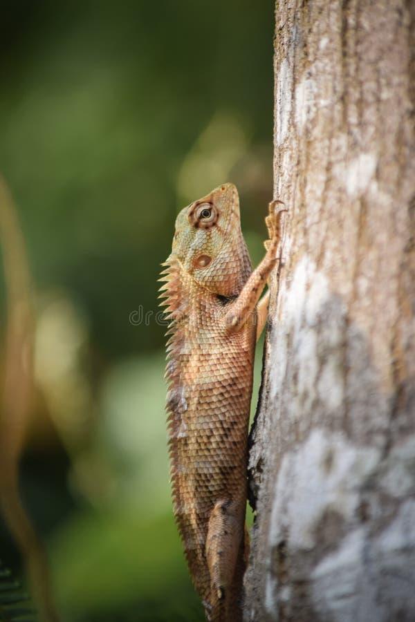 Изображение хамелеона  Изображения хамелеона   Фото хамелеона   стоковая фотография
