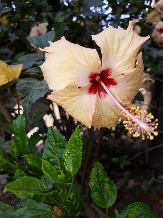 Изображение цветка природы стоковая фотография