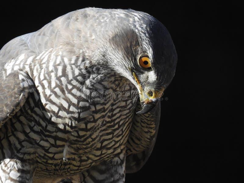 Изображение этой птицы выигрывало мир стоковые изображения rf