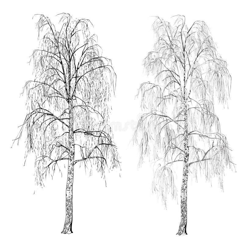 2 изображения березы без листьев, зимы, теней серого цвета бесплатная иллюстрация