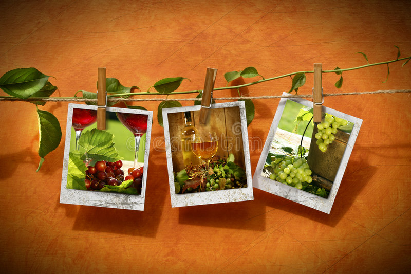 изображения clothesline прикололи лозу стоковое фото