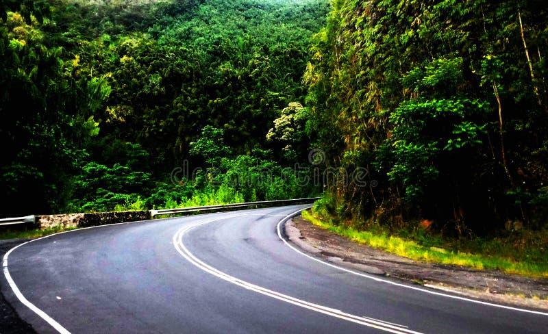 изогнутая дорога стоковая фотография rf