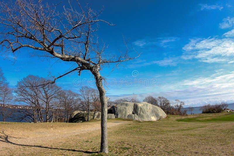 Изогнутое дерево в зиме на парке форта этапа в Глостере Массачусетсе стоковое фото