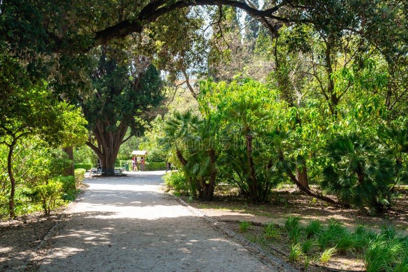 Изогнутые парком тропы почвы с деревьями и зеленой низкой травой парк в Афина, Греции стоковая фотография rf