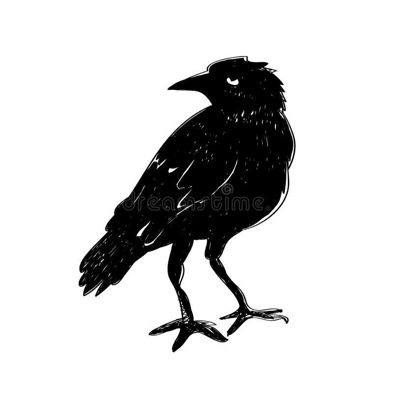 изолированная белизна ворона Ворона нарисованная рукой бесплатная иллюстрация