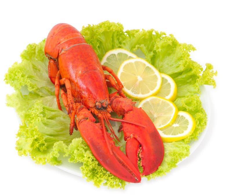 Download изолированная белизна омара Стоковое Фото - изображение насчитывающей bogota, лимон: 6858764
