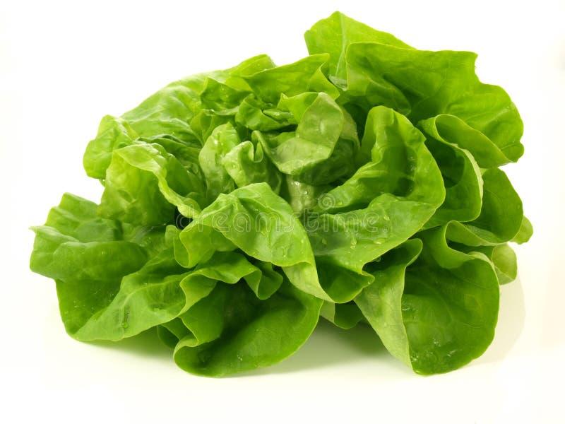 Изолированная головка салата, стоковые фотографии rf
