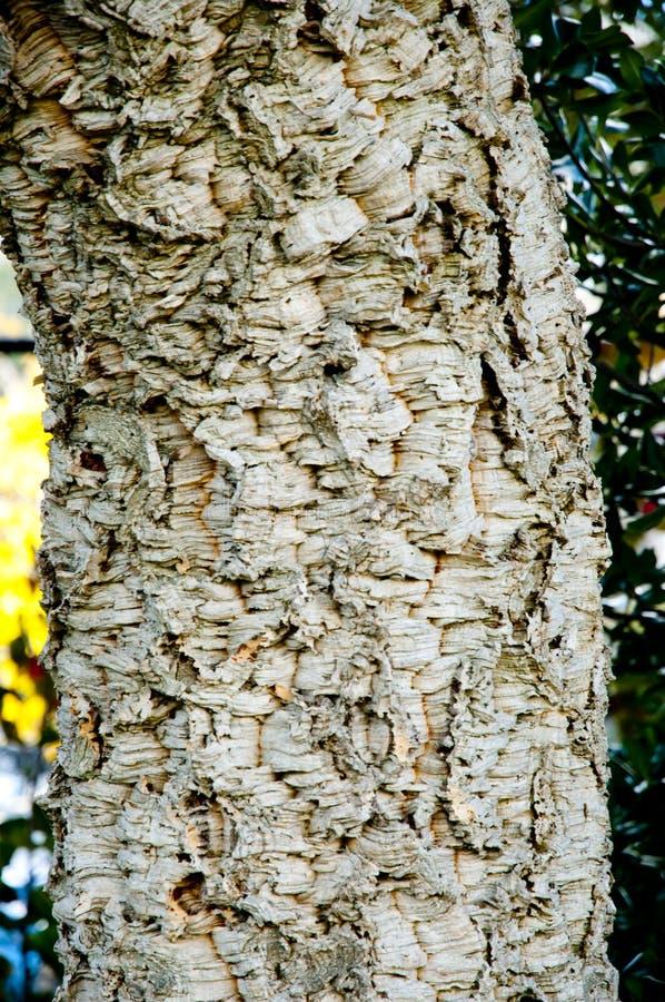 изолированная древесина части стоковое фото