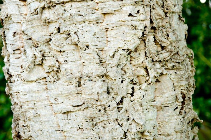 изолированная древесина части стоковые изображения
