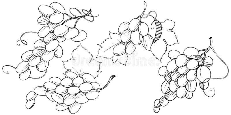 Изолированная еда виноградины здоровая в стиле вектора бесплатная иллюстрация