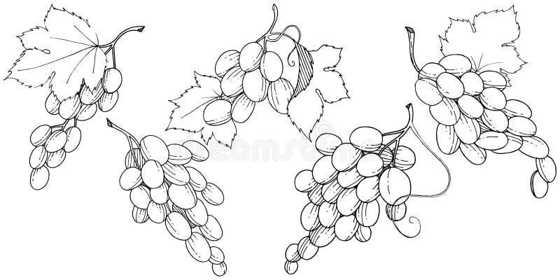 Изолированная еда виноградины здоровая в стиле вектора иллюстрация вектора