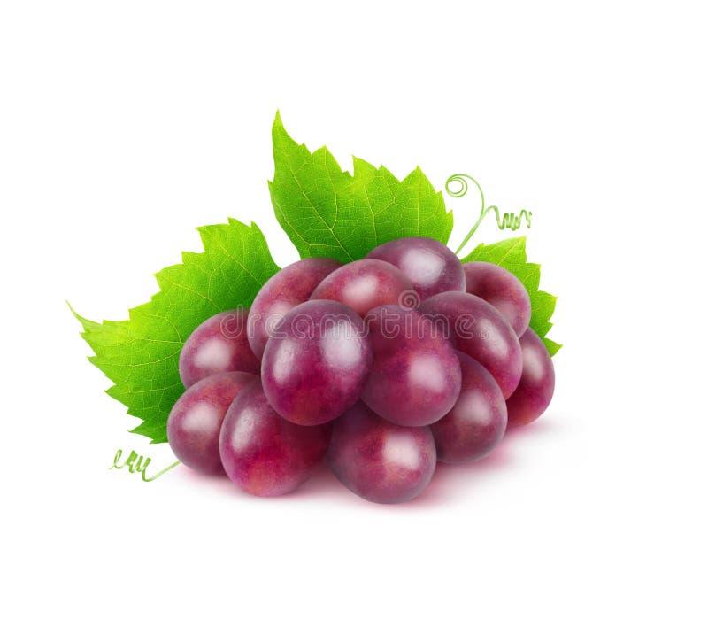 Изолированная красная виноградина стоковое фото rf