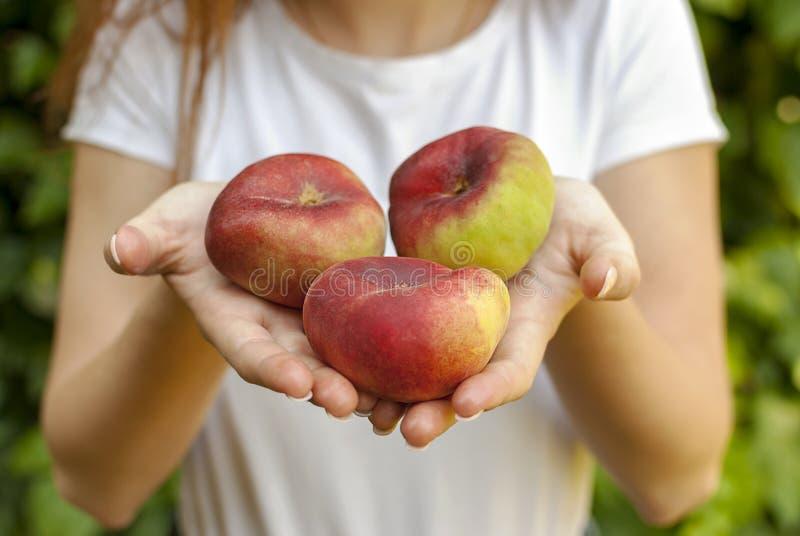 Изолированная молодая женщина держа некоторые красные плоские персики в ее руках Platycarpa Prunus Persica Китаец, плоский персик стоковые изображения