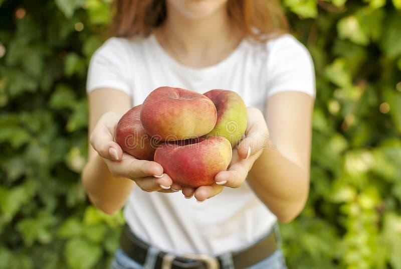 Изолированная молодая женщина держа некоторые красные плоские персики в ее руках Platycarpa Prunus Persica Китаец, плоский персик стоковое фото