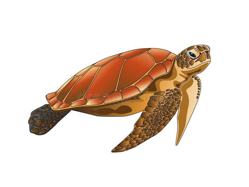 Изолированная морская черепаха на белой предпосылке иллюстрация штока