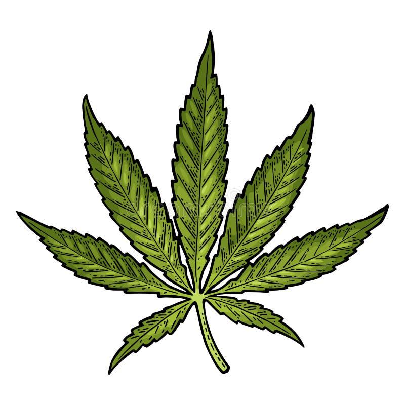 изолированная предпосылкой белизна марихуаны листьев Винтажная черная иллюстрация гравировки вектора бесплатная иллюстрация
