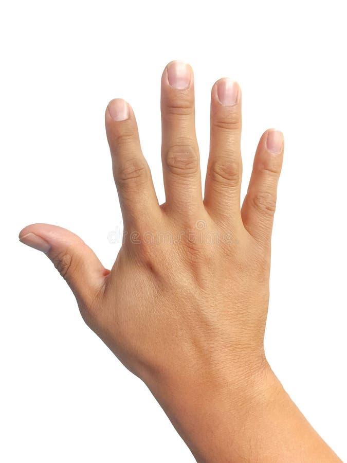 Изолированная рука в белой предпосылке стоковые фотографии rf