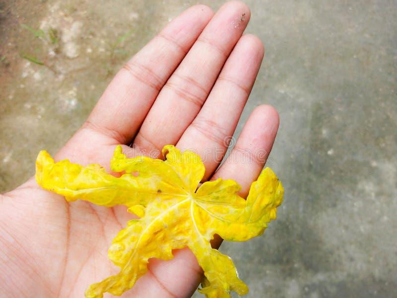 изолированная рукой белизна листьев стоковые фотографии rf