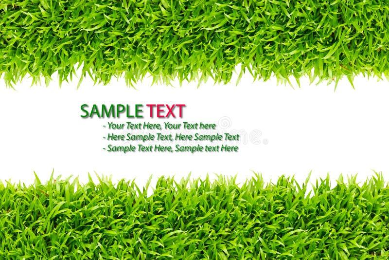 изолированная трава рамки стоковая фотография