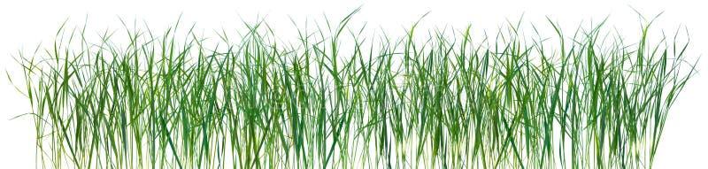 изолированная травой текстура картины стоковое фото rf