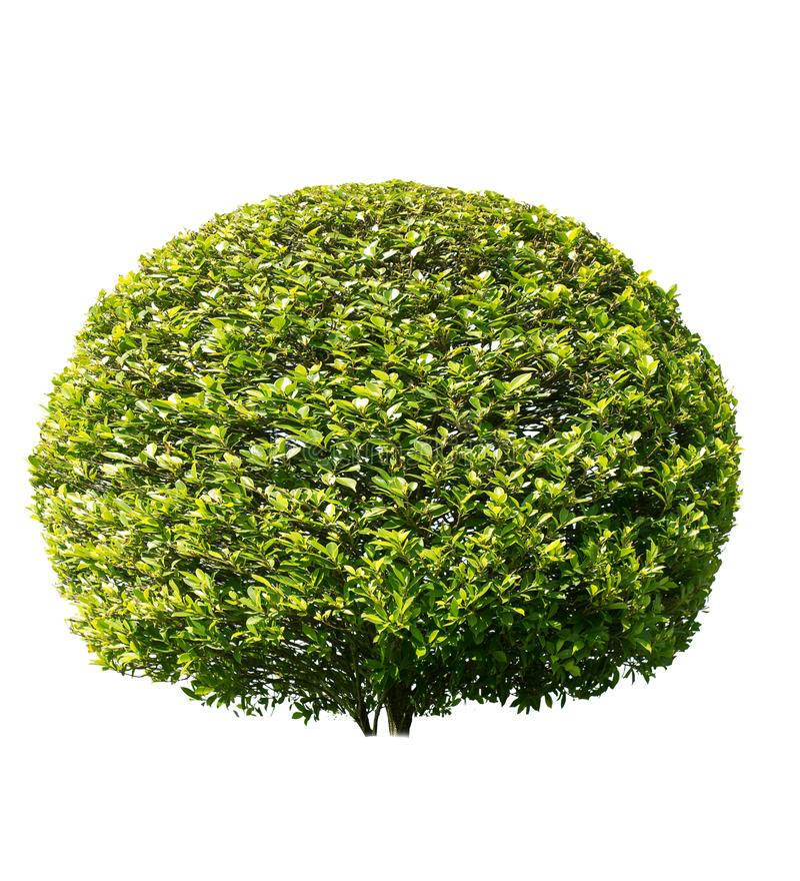 Изолированное дерево на белой предпосылке стоковая фотография rf