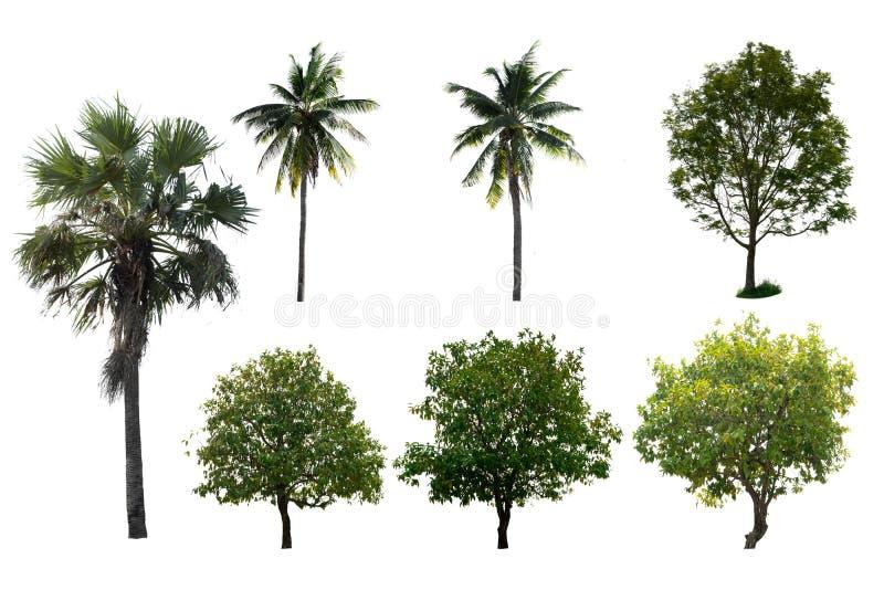Изолированное дерево установило белую предпосылку стоковые изображения rf